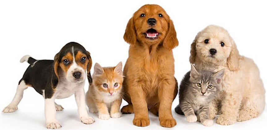 All You Need To Know About Buying A Pet Care Franchise